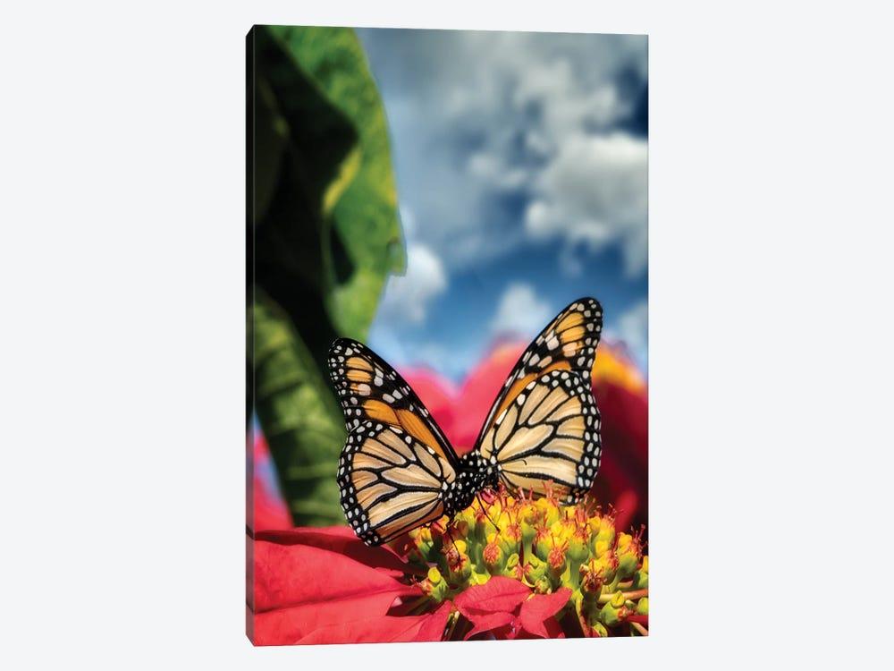 Monarch Butterflies I by Dennis Frates 1-piece Canvas Artwork