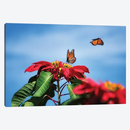 Monarch Butterflies II Canvas Print #DEN594} by Dennis Frates Canvas Print