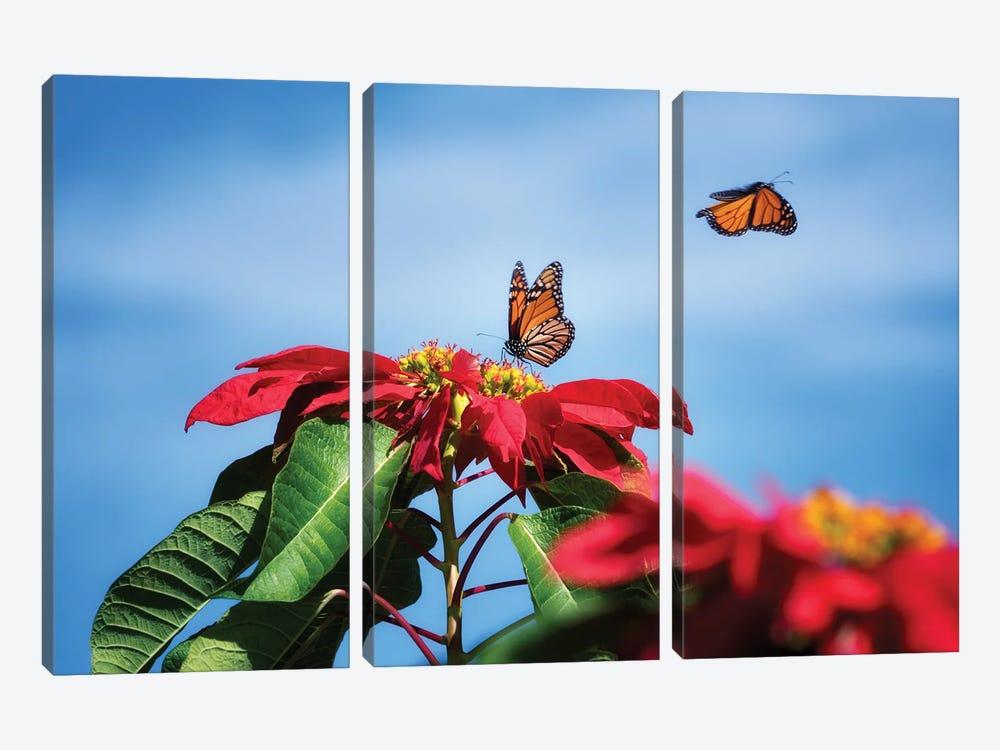 Monarch Butterflies II by Dennis Frates 3-piece Canvas Art Print