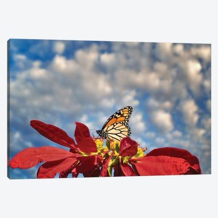 Monarch Butterflies III Canvas Print #DEN595} by Dennis Frates Canvas Print