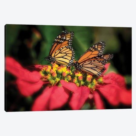 Monarch Butterflies IV Canvas Print #DEN596} by Dennis Frates Canvas Art Print