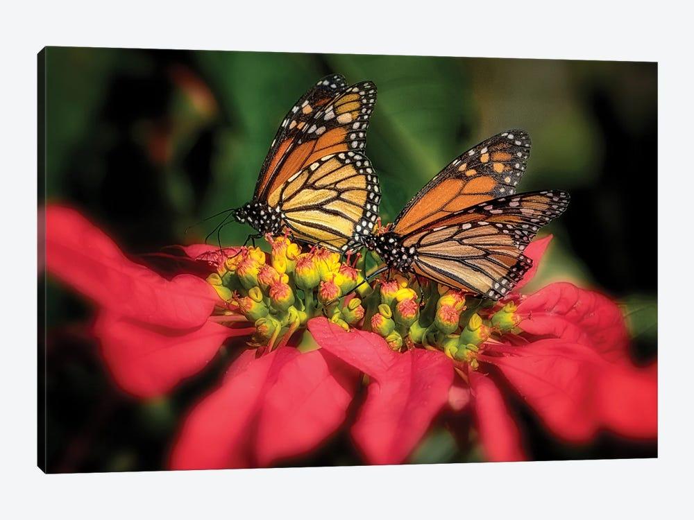 Monarch Butterflies IV by Dennis Frates 1-piece Art Print