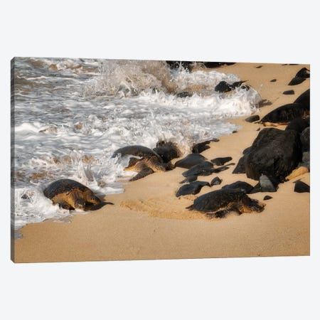 Turtles Arrival Canvas Print #DEN598} by Dennis Frates Canvas Wall Art