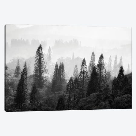 Tropical Forest Canvas Print #DEN600} by Dennis Frates Canvas Art