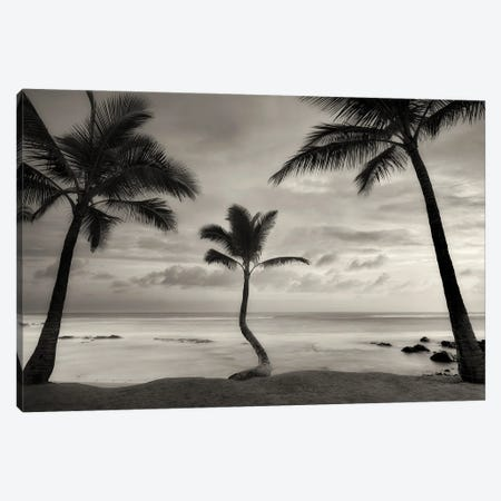 Palm Sunset Canvas Print #DEN603} by Dennis Frates Canvas Art