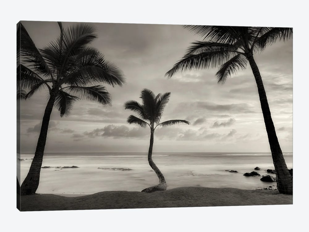 Palm Sunset by Dennis Frates 1-piece Canvas Print