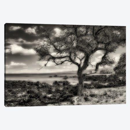 Bye The Seashore Canvas Print #DEN605} by Dennis Frates Art Print