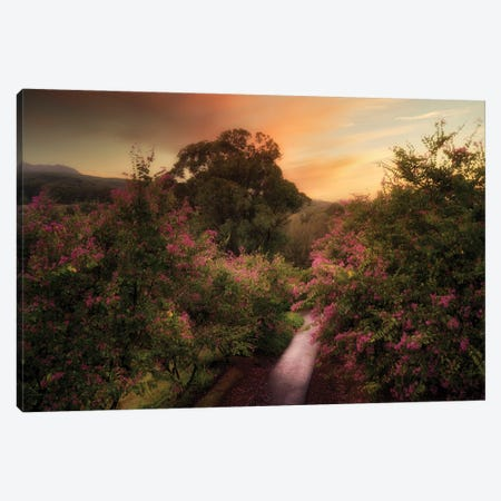 Painterly Road Canvas Print #DEN628} by Dennis Frates Canvas Wall Art