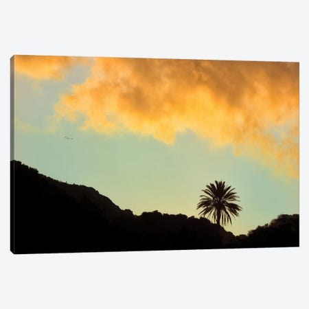 Lone Palm Sunset Canvas Print #DEN629} by Dennis Frates Canvas Artwork
