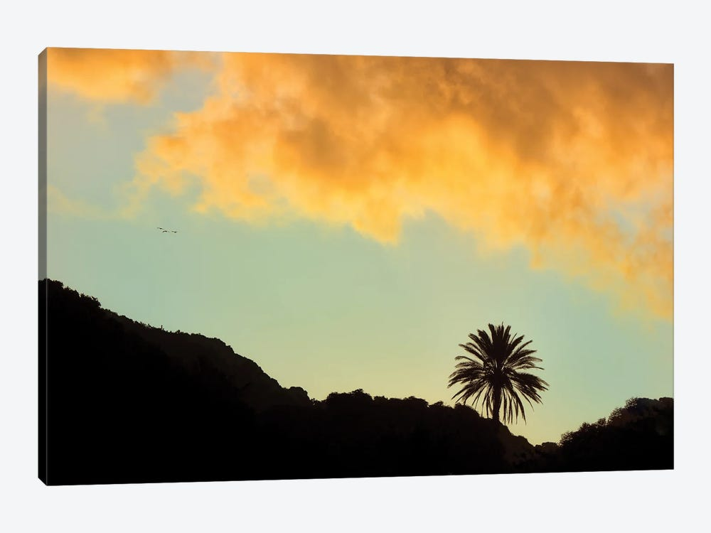 Lone Palm Sunset by Dennis Frates 1-piece Canvas Print