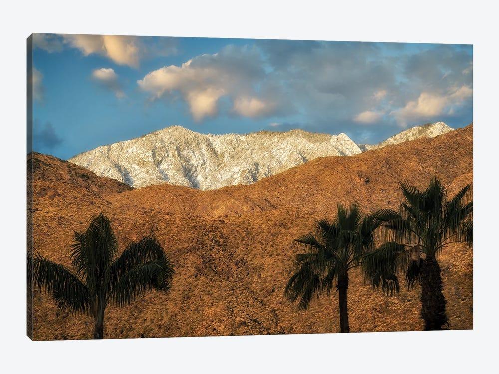 Palm Desert Snowfall II by Dennis Frates 1-piece Canvas Art
