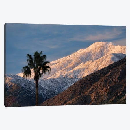 Palm Desert Snowfall V Canvas Print #DEN636} by Dennis Frates Canvas Art