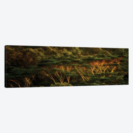 Tropical Trees Canvas Print #DEN645} by Dennis Frates Canvas Print