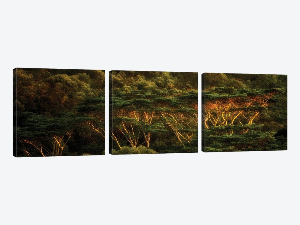 Tropical Trees by Dennis Frates 3-piece Canvas Print