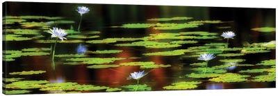 Tropical Lilies Canvas Art Print