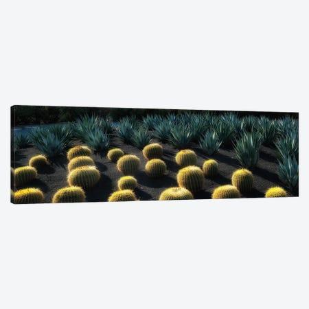 Cactus Garden Canvas Print #DEN657} by Dennis Frates Canvas Art