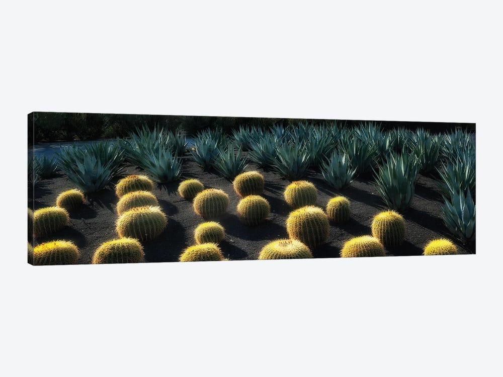 Cactus Garden by Dennis Frates 1-piece Canvas Art