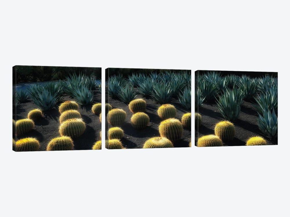Cactus Garden by Dennis Frates 3-piece Canvas Art