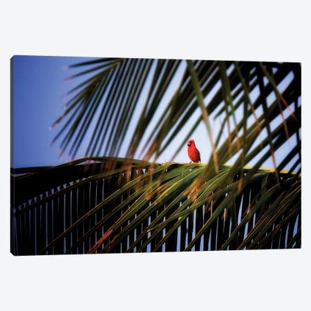 Cardinal Song Canvas Print #DEN65} by Dennis Frates Canvas Wall Art