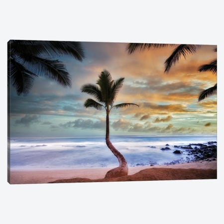 Palm Sunrise II Canvas Print #DEN665} by Dennis Frates Canvas Art Print