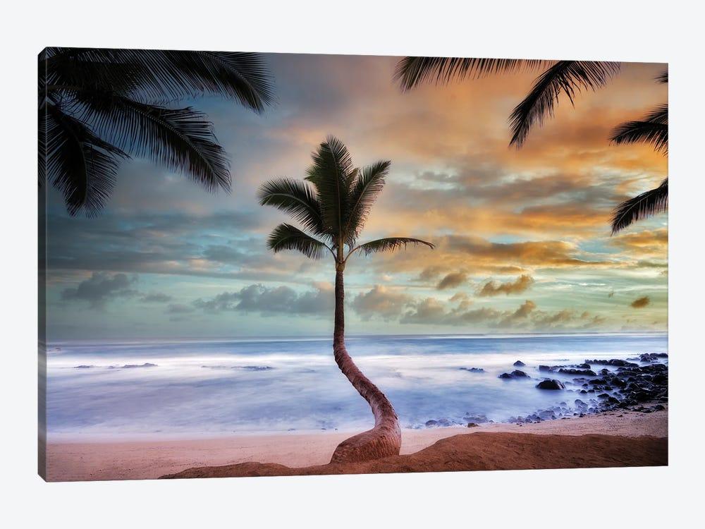 Palm Sunrise II by Dennis Frates 1-piece Art Print