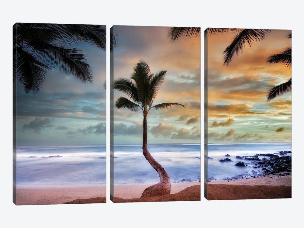 Palm Sunrise II by Dennis Frates 3-piece Canvas Art Print