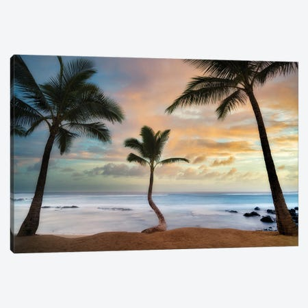 Palm Sunrise III Canvas Print #DEN666} by Dennis Frates Art Print