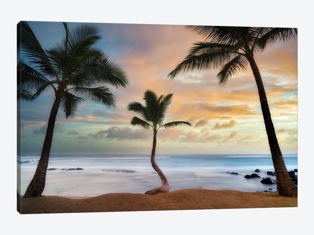Palm Sunrise III by Dennis Frates 1-piece Canvas Art