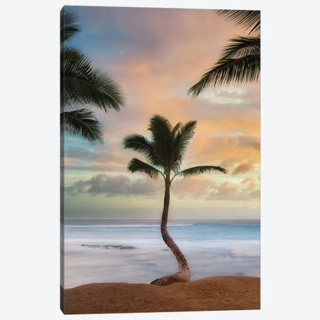 Palm Sunrise V Canvas Print #DEN669} by Dennis Frates Canvas Art