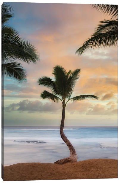 Palm Sunrise V Canvas Art Print