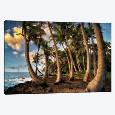 Hawaii Palms Canvas Print #DEN695} by Dennis Frates Canvas Wall Art