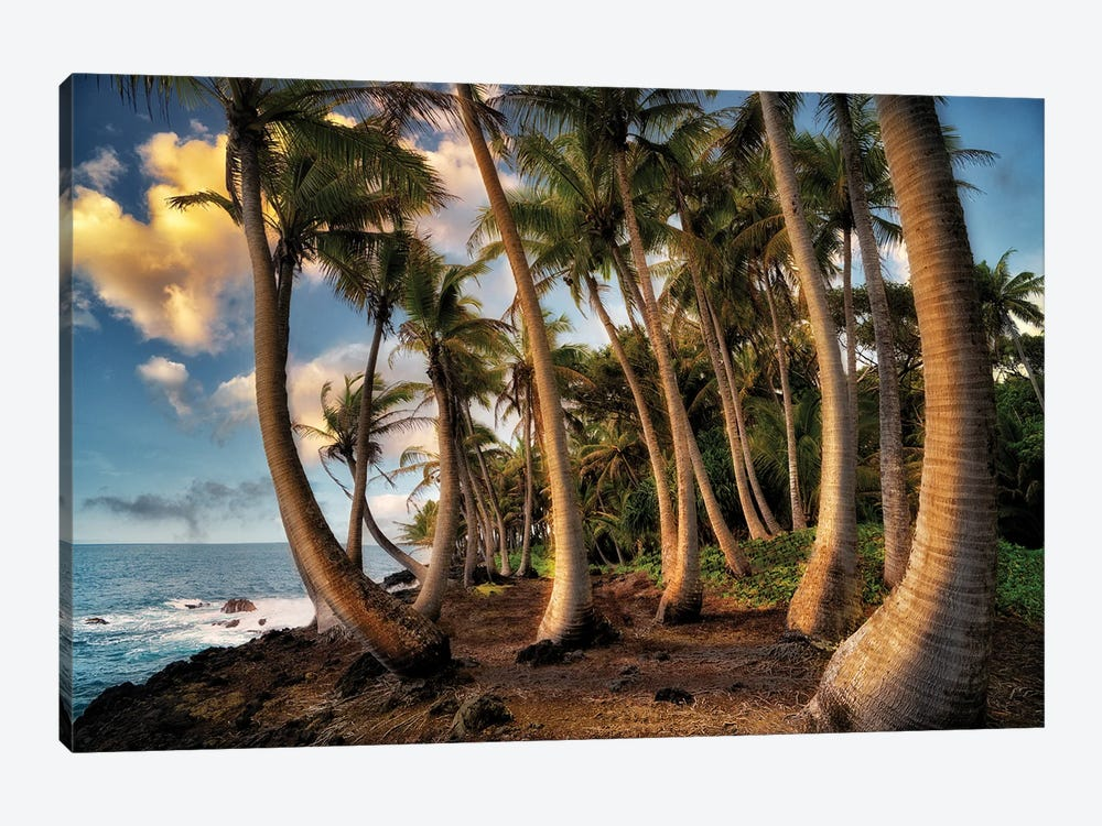 Hawaii Palms by Dennis Frates 1-piece Canvas Art