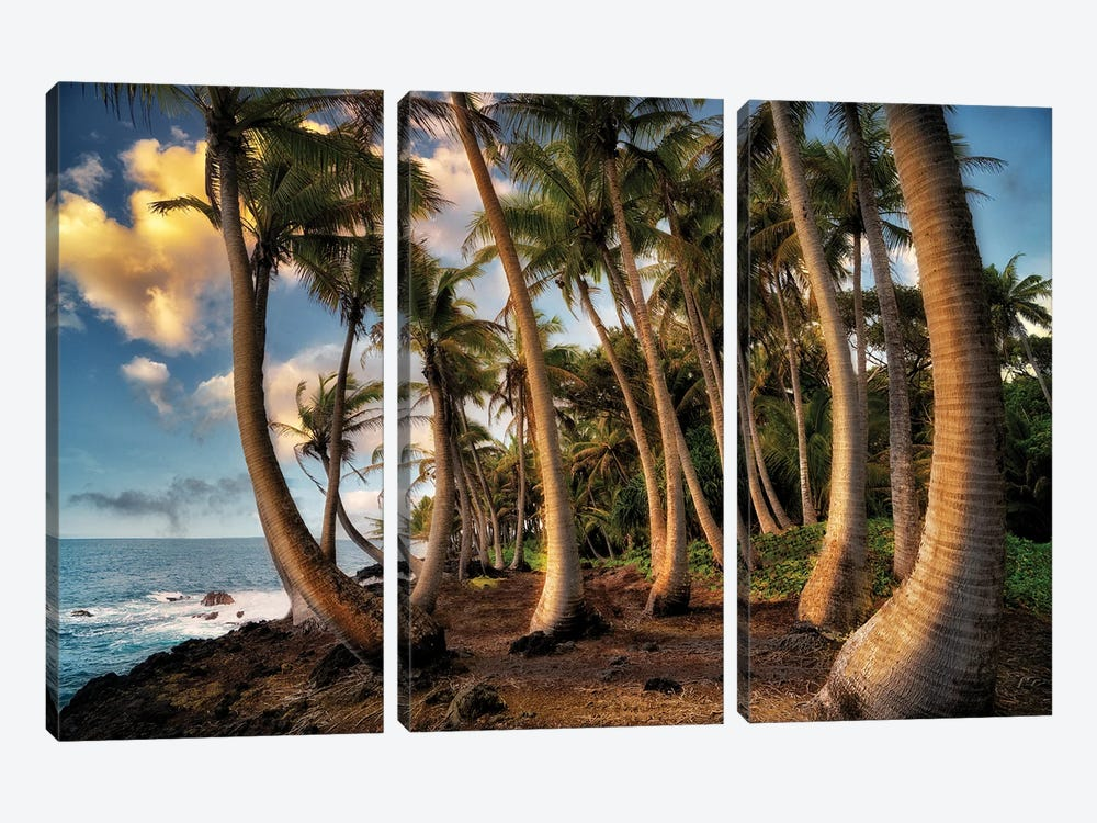 Hawaii Palms by Dennis Frates 3-piece Canvas Art