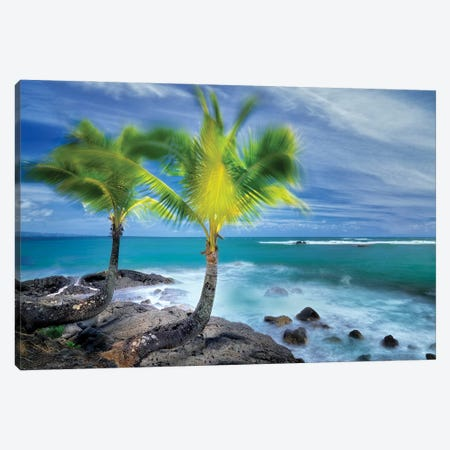 Tropical Together I Canvas Print #DEN698} by Dennis Frates Canvas Art Print