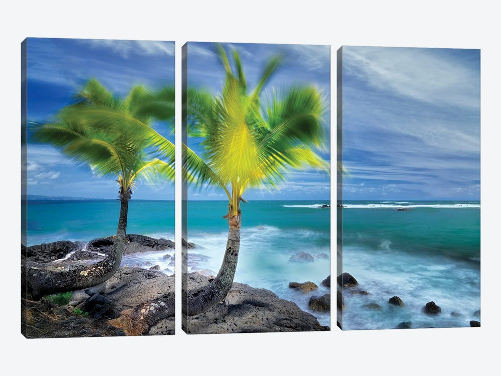 Tropical Together I by Dennis Frates 3-piece Canvas Art Print