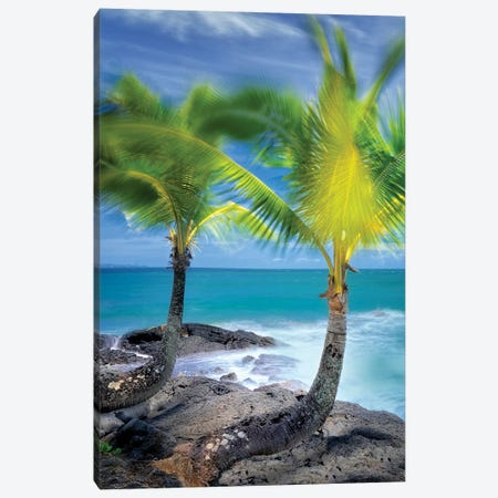 Tropical Together II Canvas Print #DEN699} by Dennis Frates Canvas Art Print