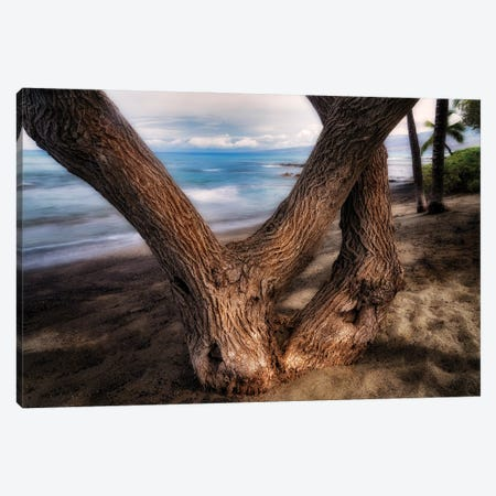 Tree On Beach Canvas Print #DEN712} by Dennis Frates Canvas Art