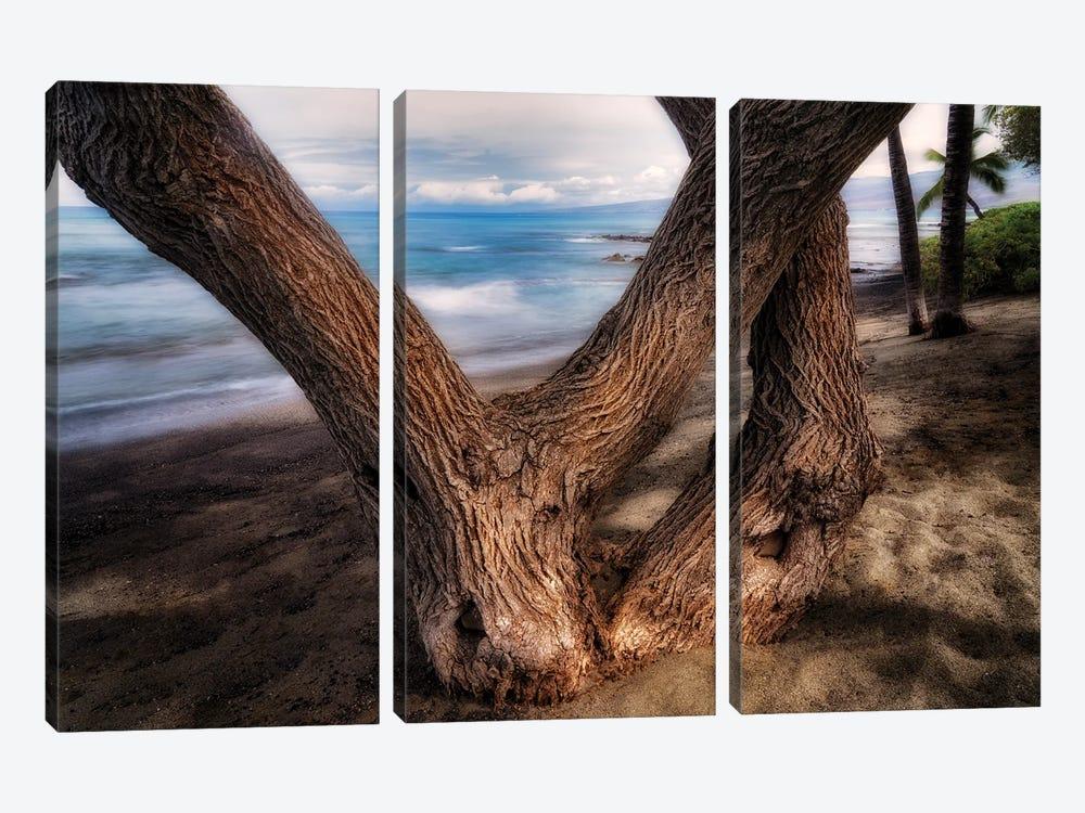 Tree On Beach by Dennis Frates 3-piece Canvas Artwork