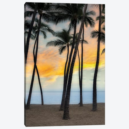 Palm Sunrise VII Canvas Print #DEN719} by Dennis Frates Canvas Art