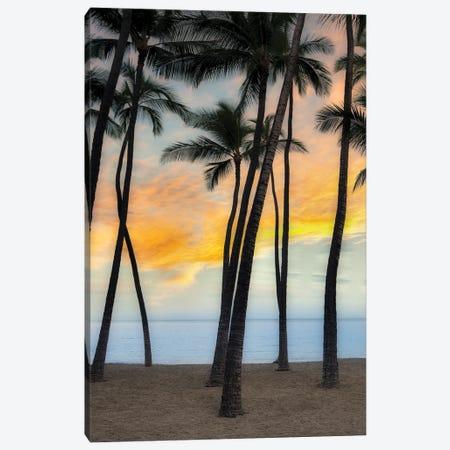 Palm Sunrise VII Canvas Print #DEN719} by Dennis Frates Canvas Art