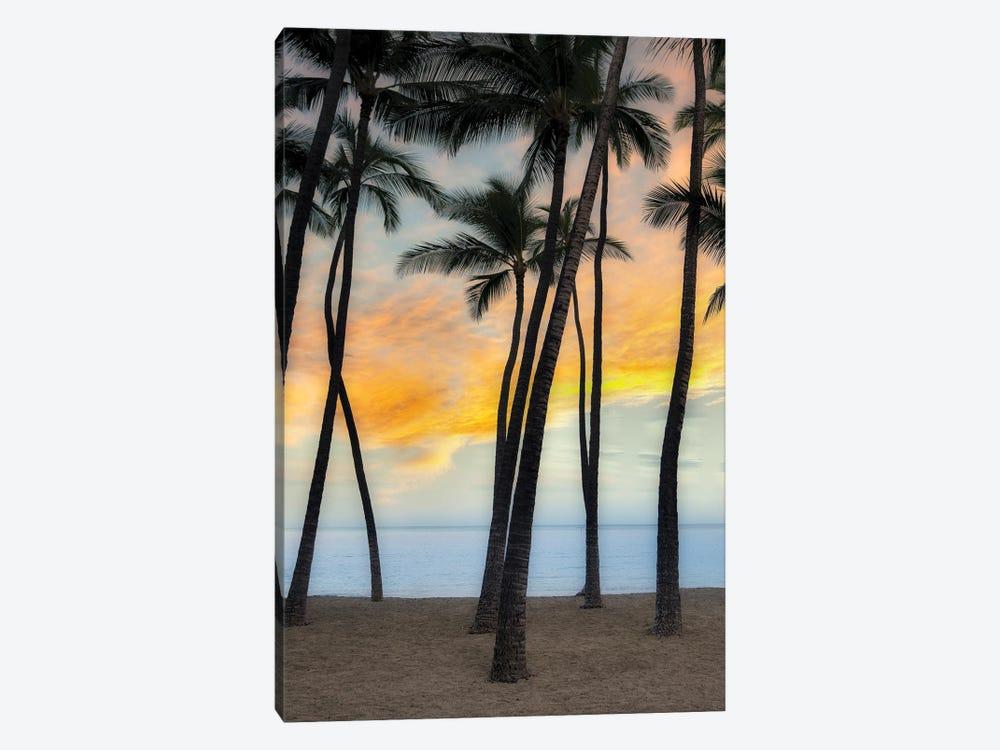 Palm Sunrise VII by Dennis Frates 1-piece Canvas Art Print