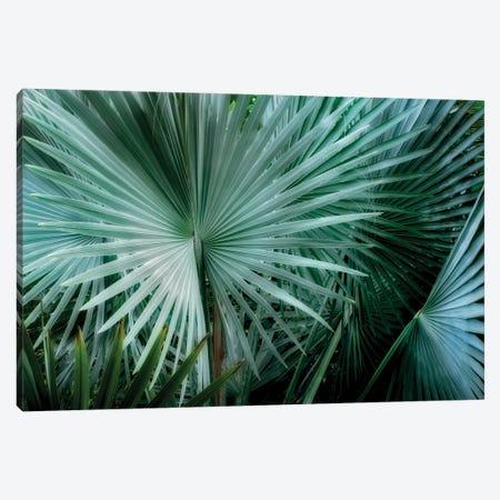 Tropical Plant Canvas Print #DEN732} by Dennis Frates Canvas Art