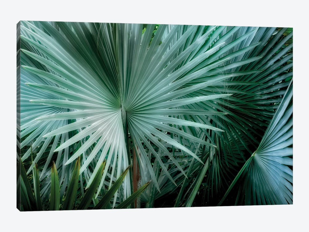 Tropical Plant by Dennis Frates 1-piece Canvas Artwork