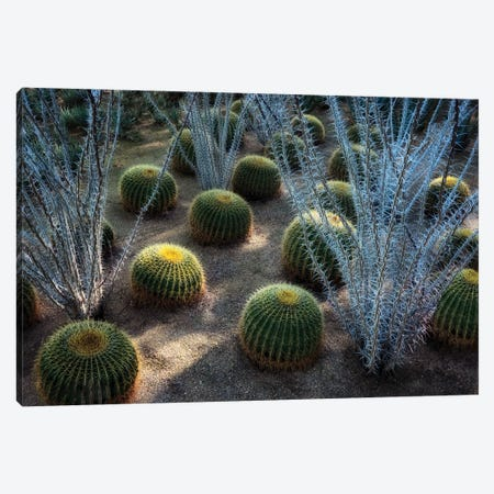 Desert Plants Canvas Print #DEN736} by Dennis Frates Canvas Art Print