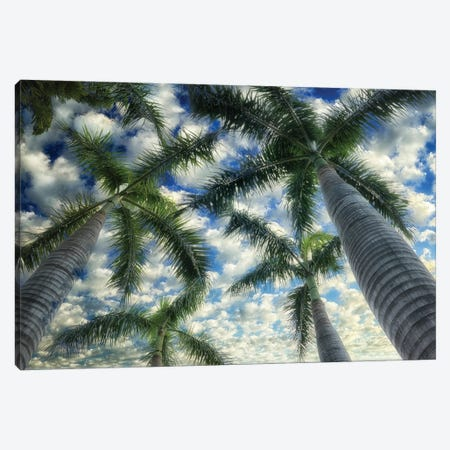 Palm Trees Canvas Print #DEN741} by Dennis Frates Art Print