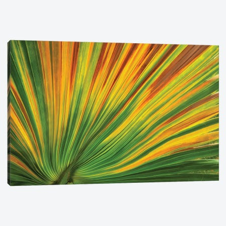 Palm Leaf Canvas Print #DEN743} by Dennis Frates Canvas Art Print