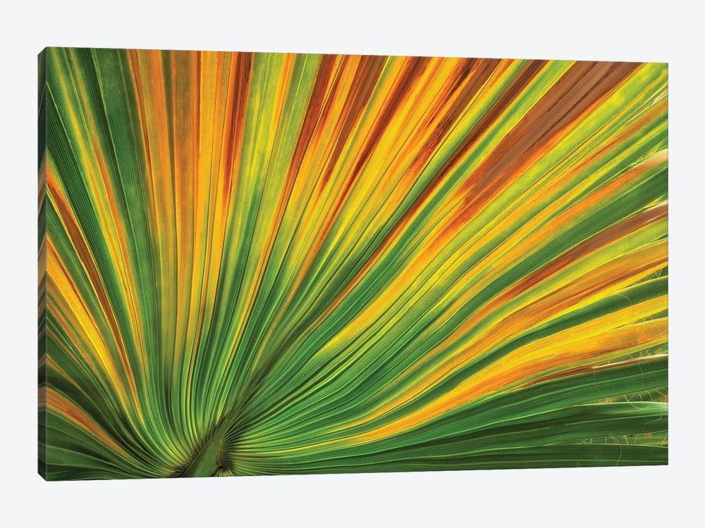 Palm Leaf by Dennis Frates 1-piece Canvas Artwork