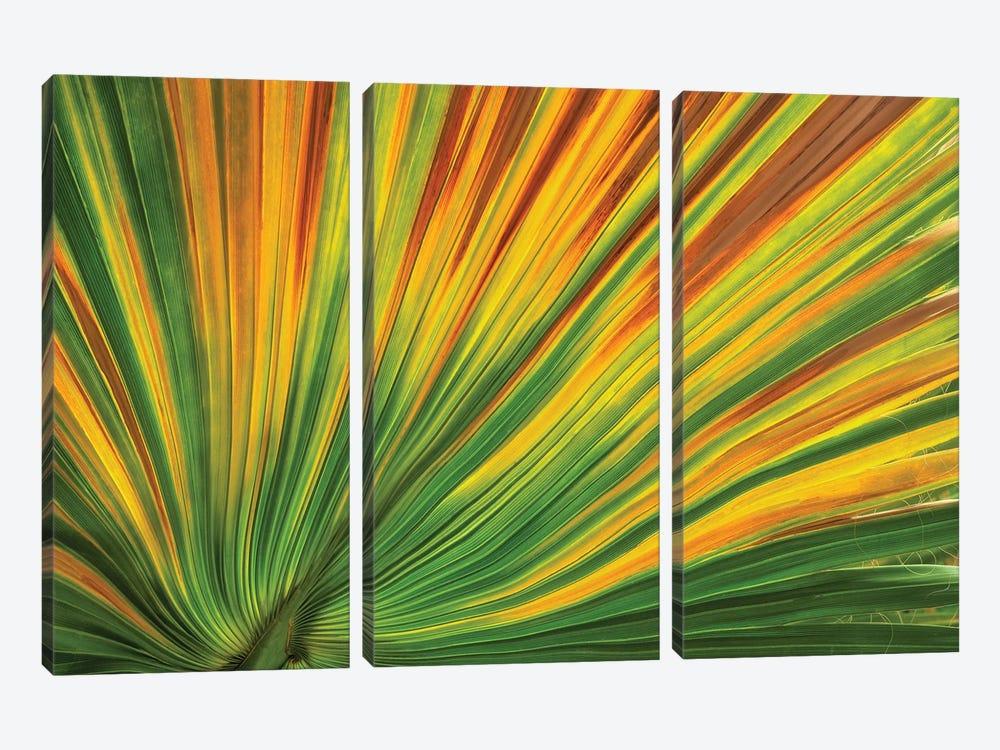 Palm Leaf by Dennis Frates 3-piece Canvas Artwork