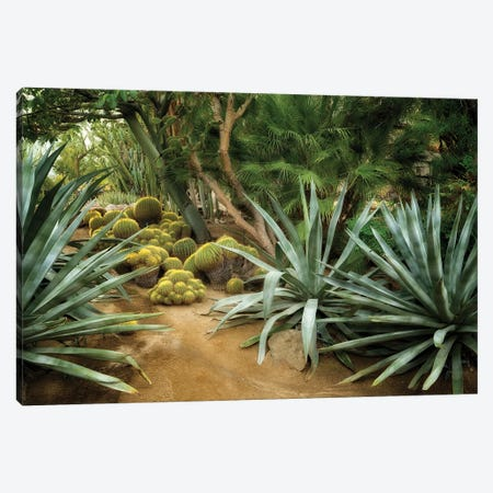 Cactus Gaden II Canvas Print #DEN747} by Dennis Frates Canvas Art