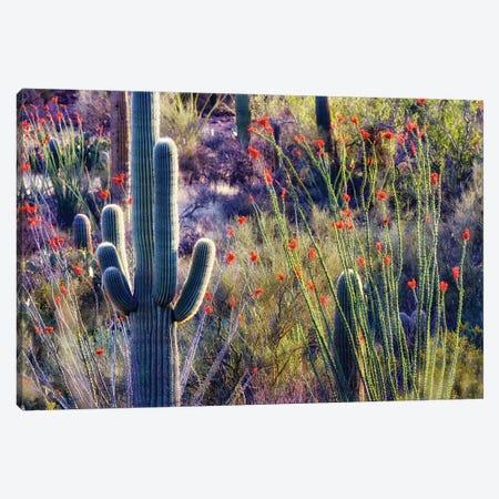 Desert Bloom II Canvas Print #DEN776} by Dennis Frates Canvas Art Print